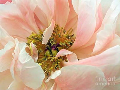 Pastel Floral Art Print by Kaye Menner