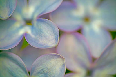 Photograph - Pastel Flower Petals by Peggy Collins