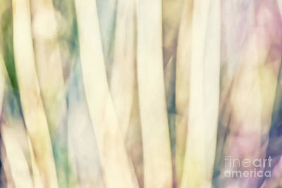 Pastel Forest Wild Grasses Photographic Abstract Art Print by Natalie Kinnear