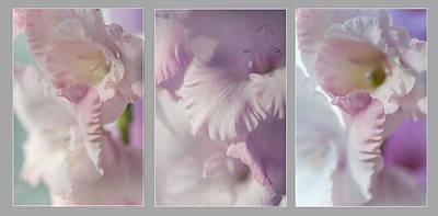 Photograph - Pastel Gladiolus Triptych by Jenny Rainbow