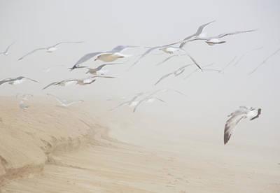 Pastel Gulls In Fog Art Print