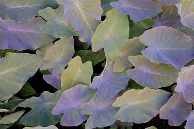 Photograph - Pastel Leaves by James Steele