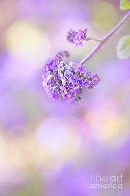 Flower Blooms Photograph - Pastel Moods by Evelina Kremsdorf