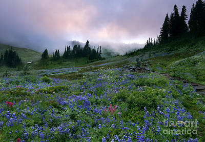 Aster Photograph - Pastel Mountain Dawn by Mike Dawson