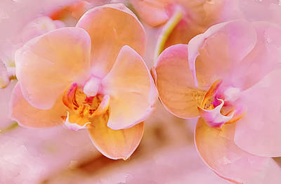 Photograph - Pastel Orchids 2 by Julie Palencia