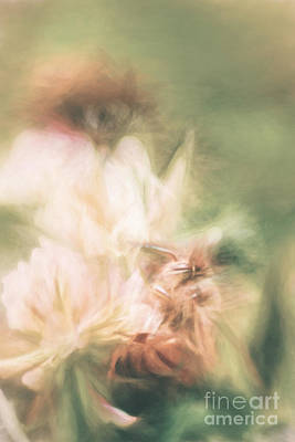 Photograph - Pastel Painting Of A Honeybee Insect  by Jorgo Photography - Wall Art Gallery