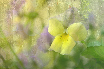 Photograph - Pastel Pansy by Ann Bridges