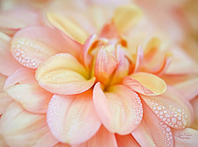 Pastel Petals And Drops Art Print by Julie Palencia