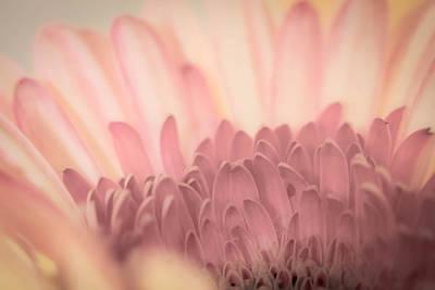Photograph - Pastel Petals by Roger Mullenhour