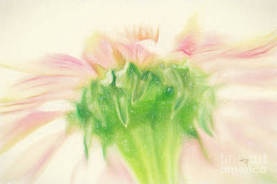 Photograph - Pastel Pink Zinnia by Lois Bryan