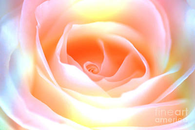 Photograph - Pastel Rose by David Birchall
