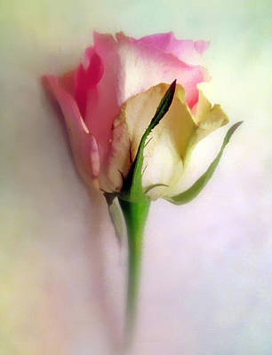 Photograph - Pastel Rose by Jessica Jenney