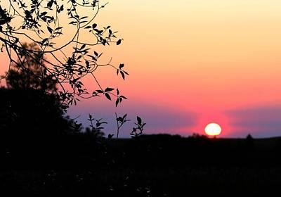 Photograph - Pastel Sunset by Tara Lowry