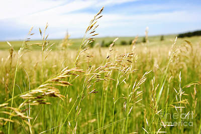 Photograph - Pastoral Field Of Grass by Lincoln Rogers