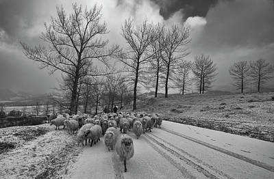 Romania Photograph - Pastoral by Julien Oncete