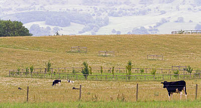 Photograph - Pastoral by Keith Armstrong