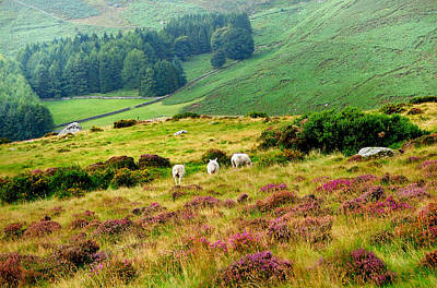 Photograph - Pastoral Scene. Wicklow. Ireland by Jenny Rainbow