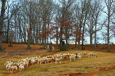 Photograph - Pastoral Sheep by Carol Montoya