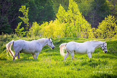 Pasture Scenes Photograph - Pastoral Texas by Inge Johnsson