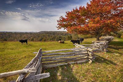 Pasture Fence Art Print