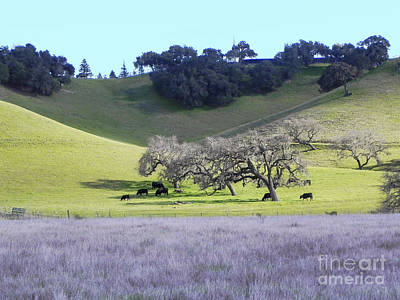 Photograph - Pasture by Patricia  Tierney