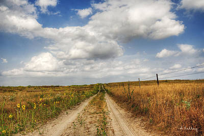 Photograph - Pasture Road by Andrea Kelley
