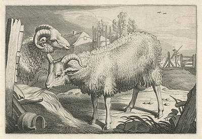 Ram Sheep Drawing - Pasture With A Sheep And A Ram, Reinier Van Persijn by Reinier Van Persijn And Jacob Gerritsz Cuyp And Nicolaes Visscher (i)