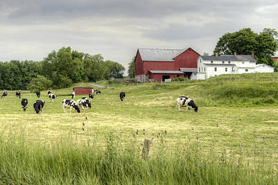 Photograph - Pastures by Ann Bridges