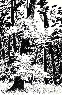 Peaceful Scene Drawing - Patch Of Sunlight In The Woods by Deborah Dendler