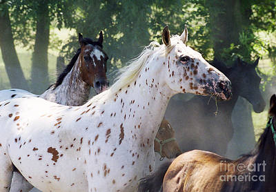 Pinto Horses Photograph - Patches And Dots by Angel  Tarantella