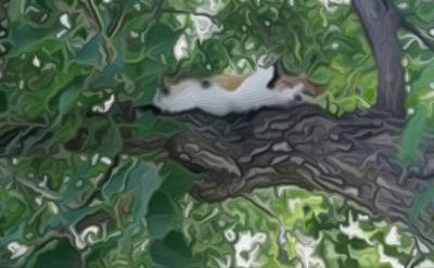Animal Lover Digital Art - Patches Asleep In A Tree by Circles of Art