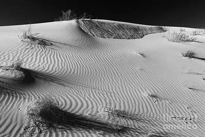 Photograph - Patches In The Dunes by Adam Jewell