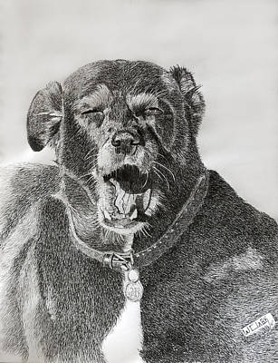 Drawing - Patches-the Old Girls Tired by Wade Clark