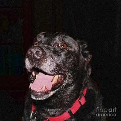 Labrador Retriever Digital Art - Patchwork Black Lab Smiling by Barbara Griffin