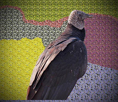 Patchwork Buzzard Art Print by Audrey Robillard