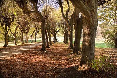 Photograph - Path 1- Ostromecko Gardens by Danuta Antas Wozniewska