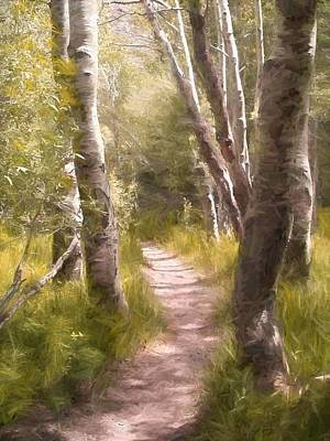 Path 1 Art Print by Pamela Cooper