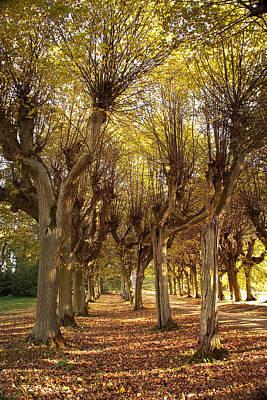 Photograph - Path 2 - Garden Photography by Danuta Antas Wozniewska