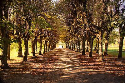 Photograph - Path 3- Ostromecko Gardens by Danuta Antas Wozniewska