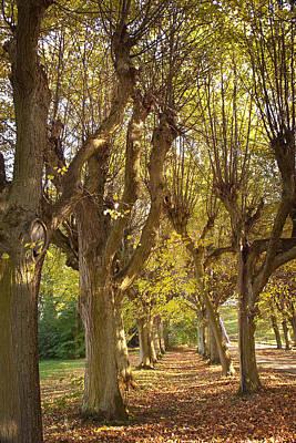 Photograph - Path 4- Ostromecko Gardens by Danuta Antas Wozniewska