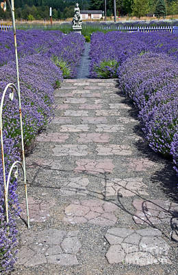 Photograph - Path Along Lavender Fields Art Prints by Valerie Garner