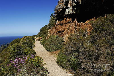 Path At Cape Of Good Hope Art Print by Sami Sarkis