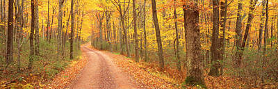 Pa State Parks Photograph - Path Hickory Run State Park Pa Usa by Panoramic Images