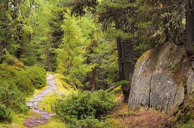 Photograph - Path In Aletschwald Forest Switzerland by Matthias Hauser