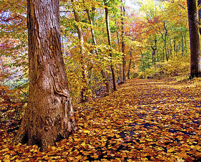 Pennypack Photograph - Path In Autumn Fairmount Park Philadelphia Pennsylvania by A Gurmankin