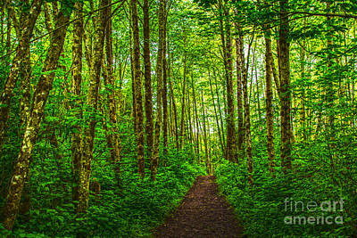 Path In Green Art Print by Sonya Lang