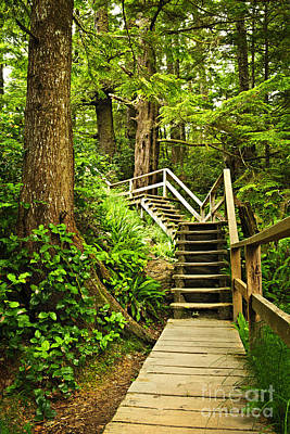 Cedar Photograph - Path In Temperate Rainforest by Elena Elisseeva
