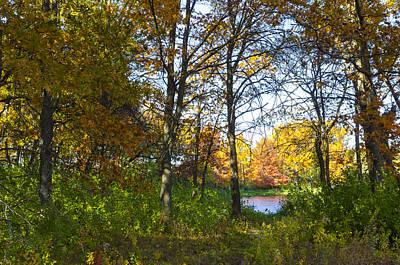 Photograph - Path In The Autumn Forest by Lynn Hansen