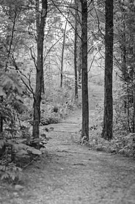 Photograph - Path In The Foggy Forest by Diana Boyd