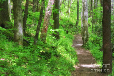 Digital Art - Path In The Forest by Jill Lang